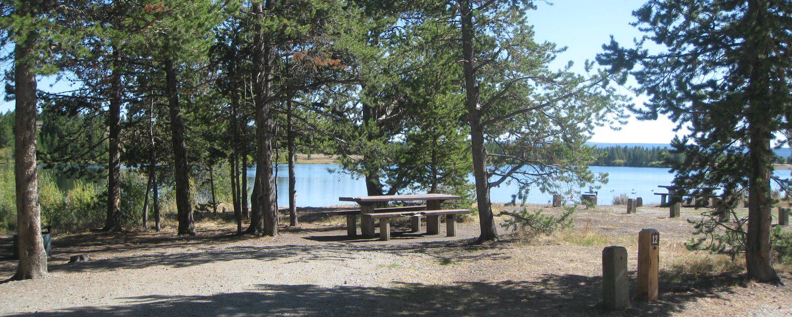 Site 12, campsite surrounded by pine trees, picnic table & fire ringSite 12
