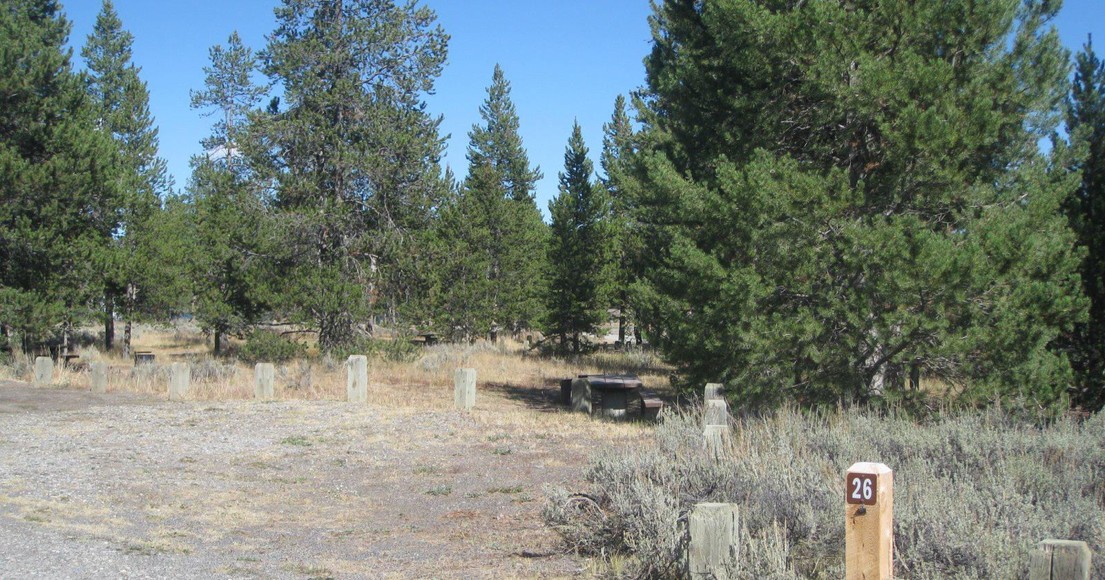 Site 26, campsite surrounded by pine trees, picnic table & fire ringSite 26