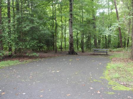 Greenbelt Park Campground Site 158