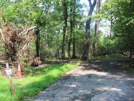 Greenbelt Park Campground Site 53