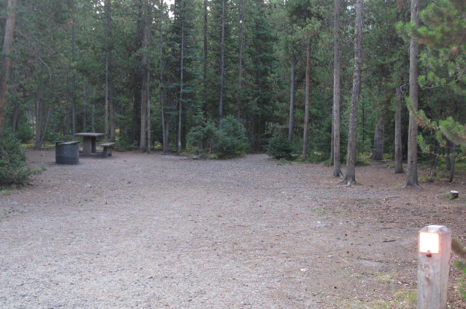 Site 2, campsite surrounded by pine trees, picnic table & fire ringSite 2