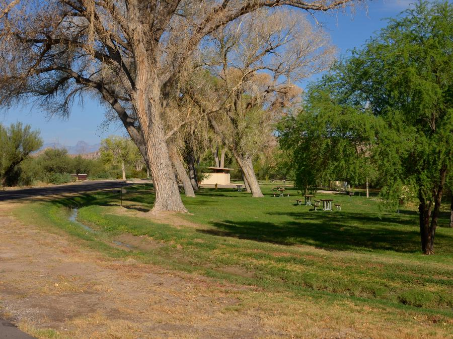 Large Cottonwood trees lining the group campsites with green grassLarge trees lining grassy, flat areas