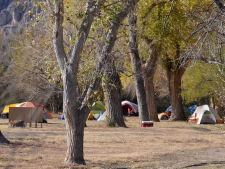 Tents scattered on the flat, grassy area amidst large treesTents scattered on flat, grassy area
