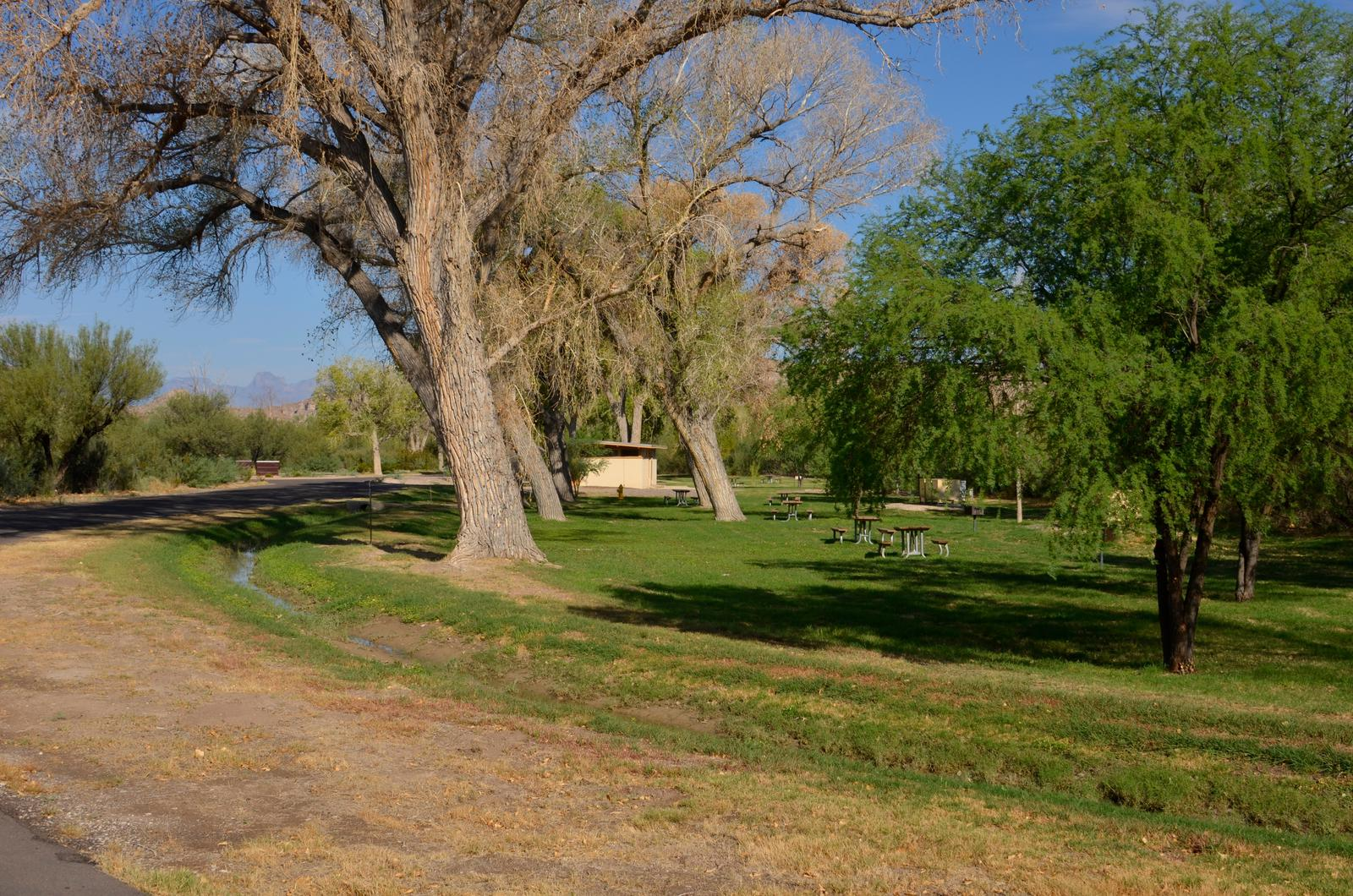 Tree-lined campsite with flat, grassy areas
