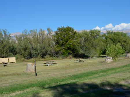 Flat, grassy, open area with picnic tables and bear boxes