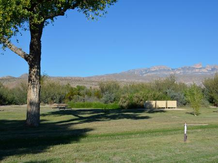 Flat, grassy area with picnic tables and bear boxes in the shade of Cottonwood trees