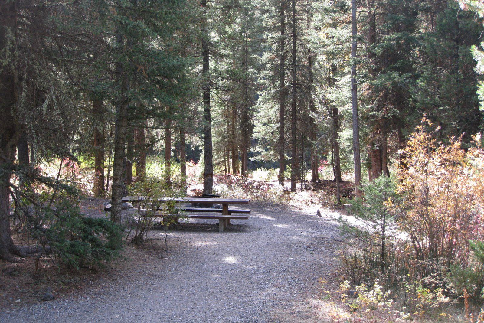 Site 10, campsite surrounded by pine trees, picnic table & fire ringSite 10