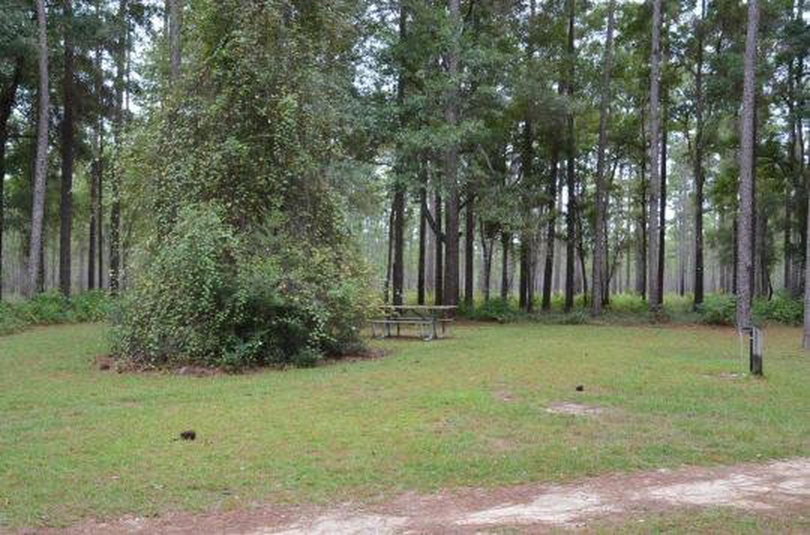 Wright Lake Campground Site 6 Full Site