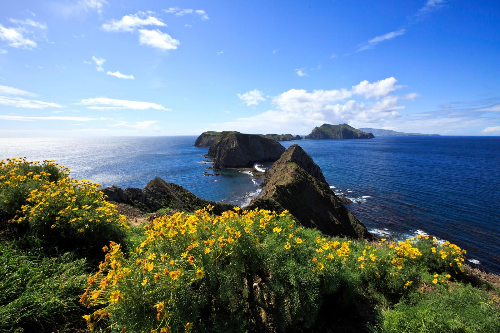 Yellow flowered plant on ocean bluff overlooking three islets and the surrounding ocean.Inspiration Point, Anacapa Island
