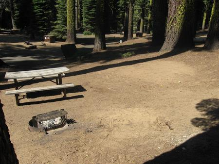 Site 186, partial shade