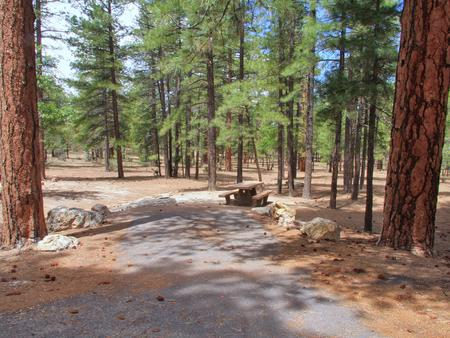 Parking spot and picnic table surrounded by trees in Mather CampgroundPicnic table and parking spot for Aspen Site 1, Mather Campground