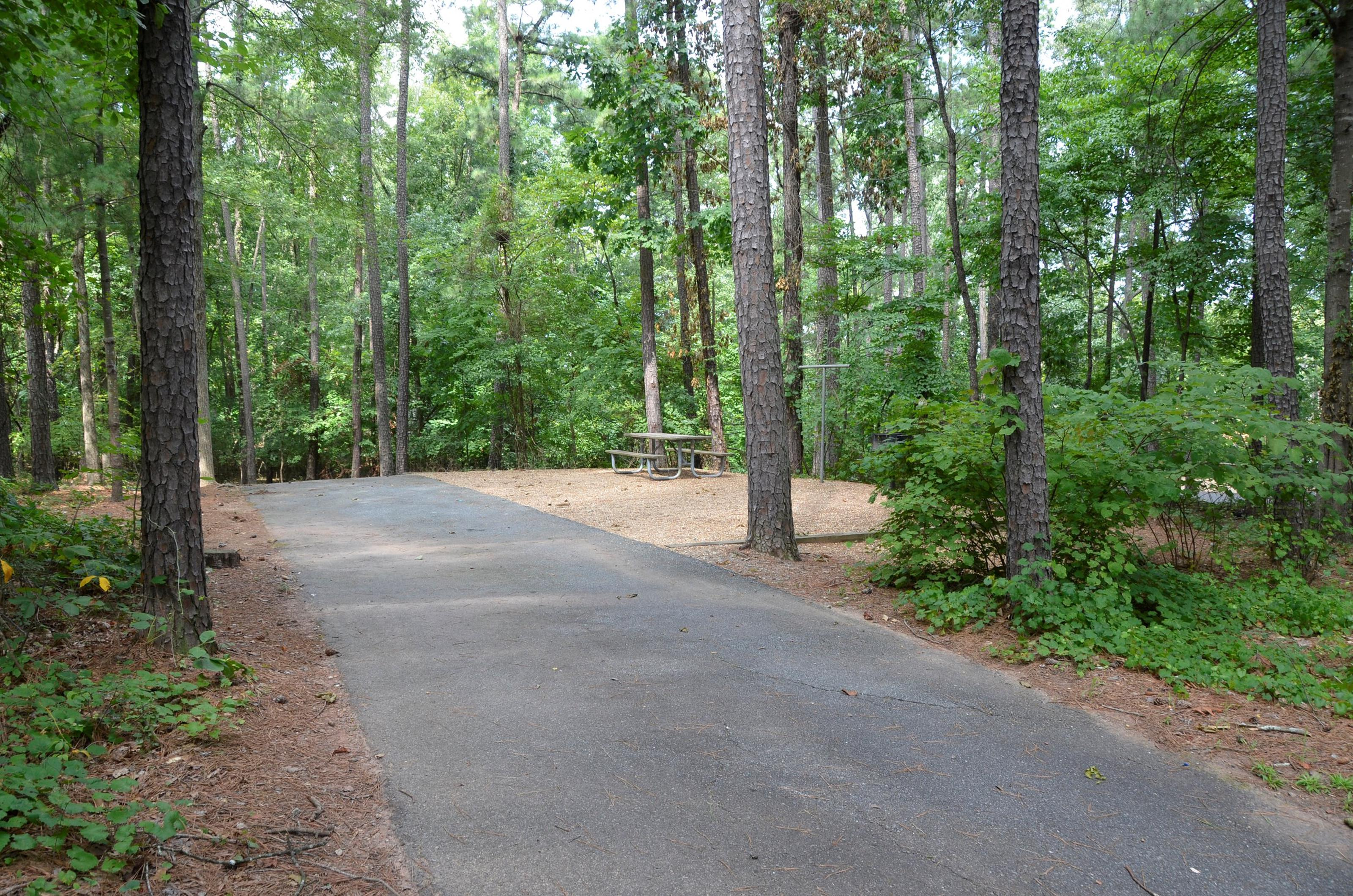 McKinney Campground Site 19