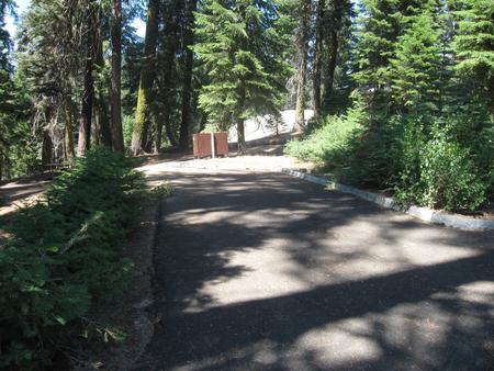 Site 50, Partial Shade, Near Creek