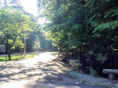 Deerlick Creek Campsite 19 Pad