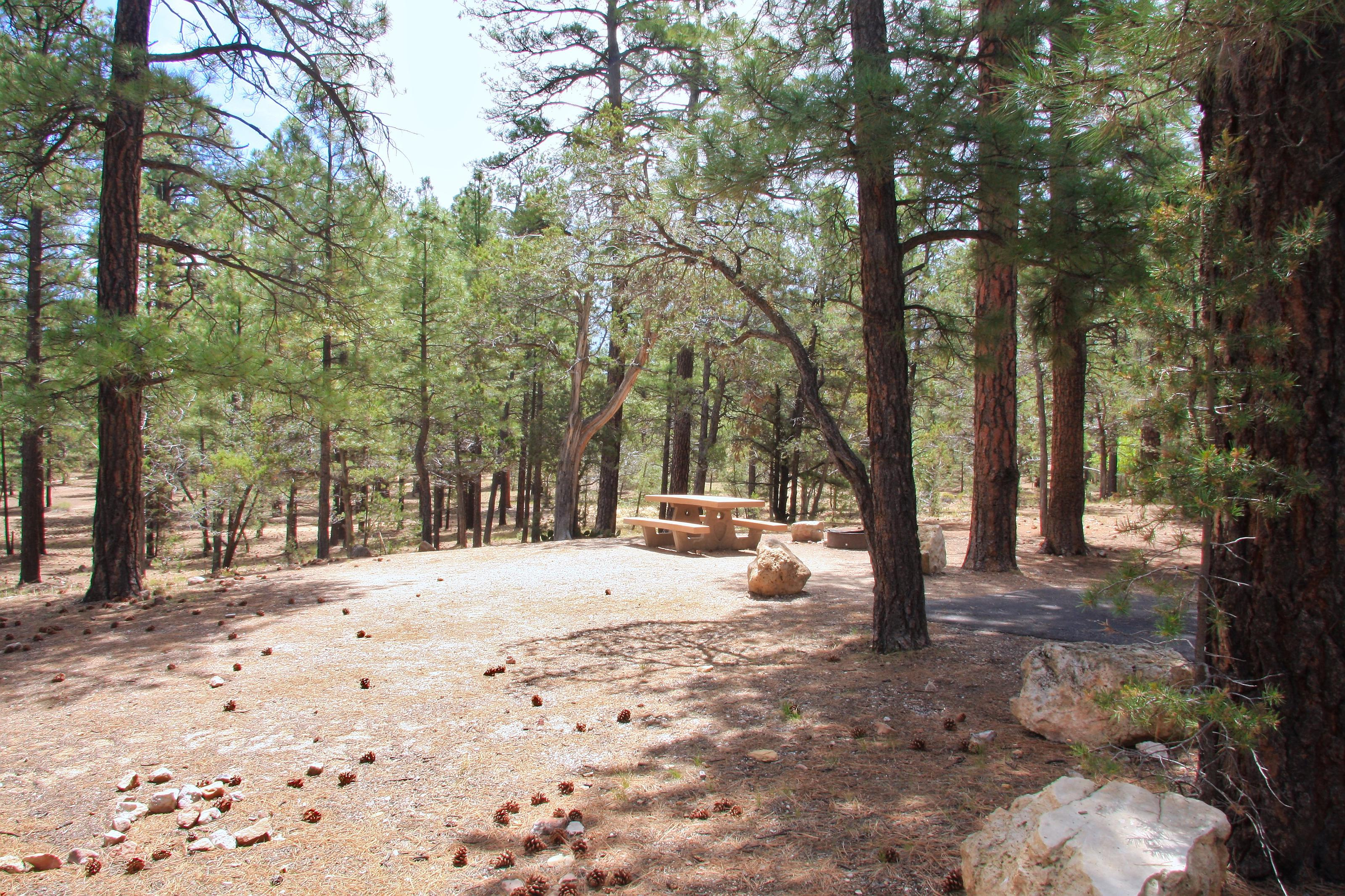 Parking spot, fire pit, and picnic table, Mather CampgroundThe parking spot, fire pit, and picnic table for Aspen Loop 21, Mather Campground