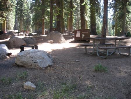 site 143, partial shade, rocky site