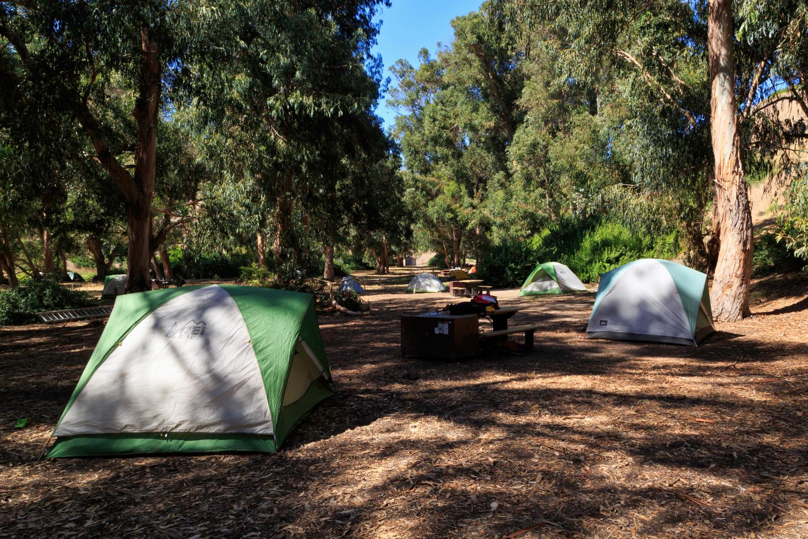 Tents in forested area.Scorpion Canyon Campground, Santa Cruz Island