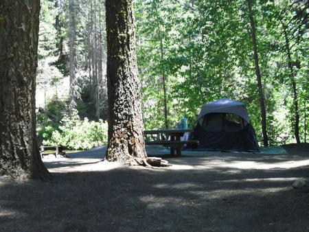 Soquel CampgroundSite 5