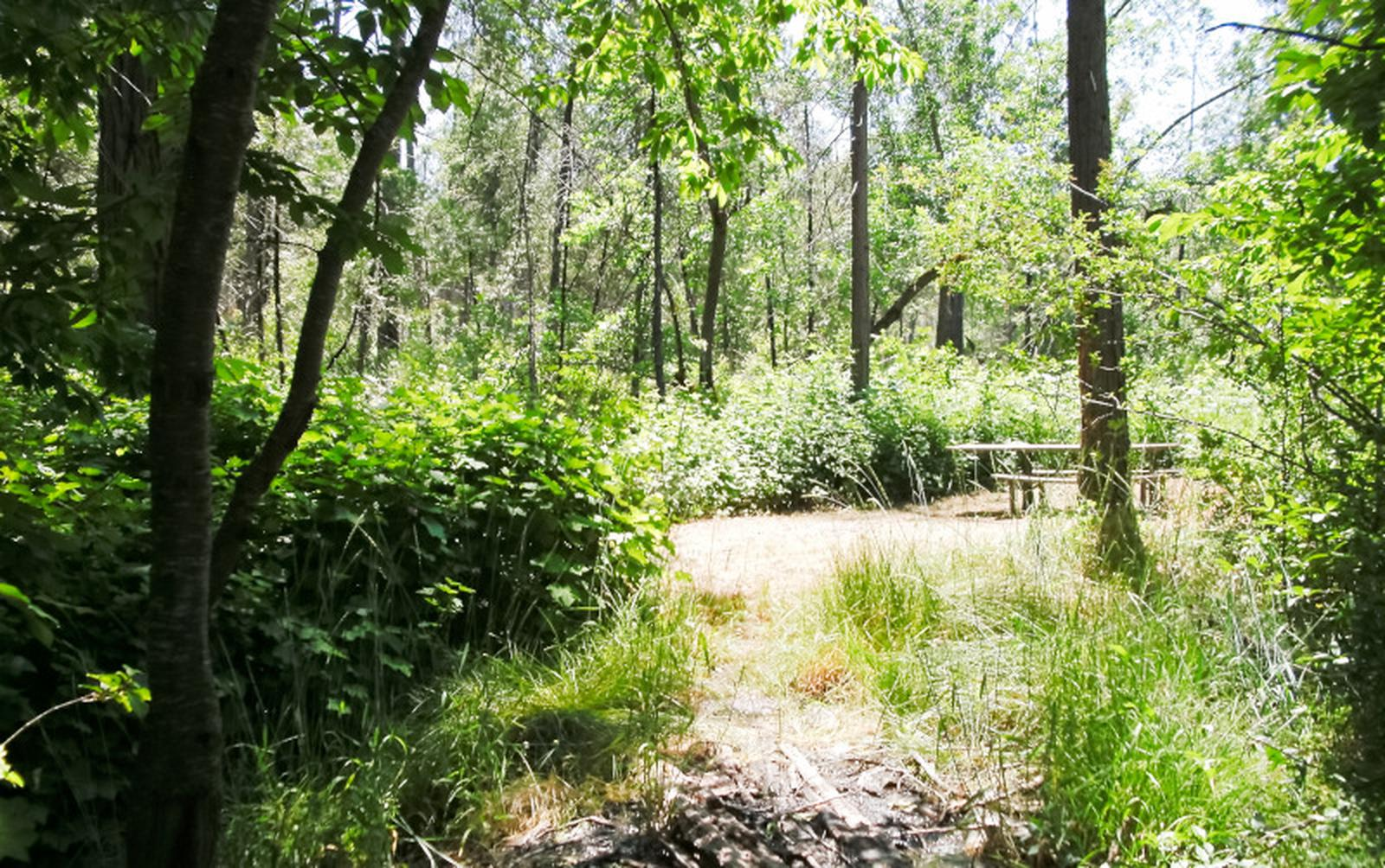 Spring Cove CampgroundSite 35