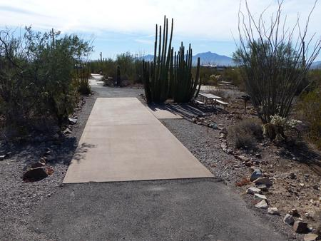 Pull-thru campsite with picnic table and grill, cactus and desert vegetation surround site.  Site 002