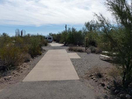 Pull-thru campsite with picnic table and grill, cactus and desert vegetation surround site.  Site 019