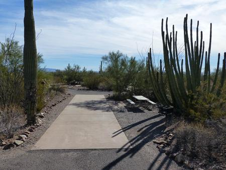 Pull-thru campsite with picnic table and grill, cactus and desert vegetation surround site.  Site 022