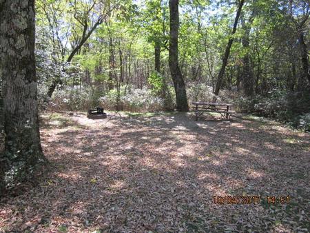 Loft Mountain Campground - Site D123