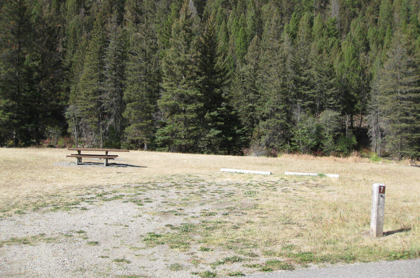 Site 7 campsite - pine trees along river, picnic table & fire ringSite 7