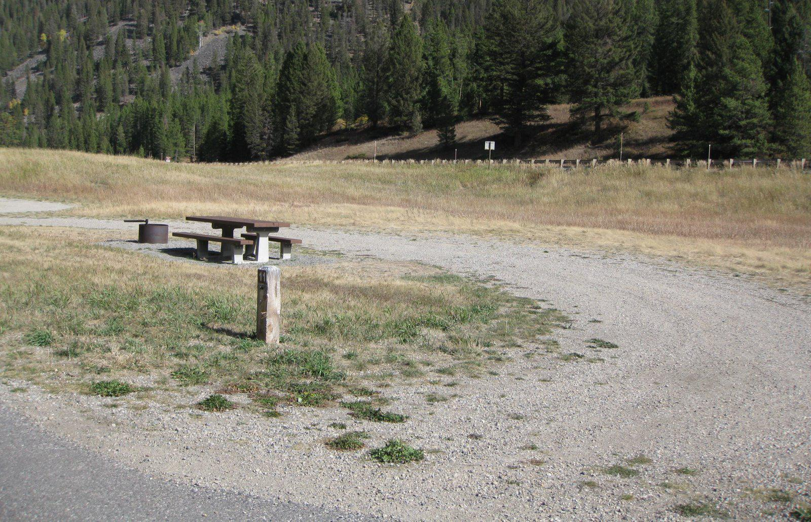 Site 11 campsite - pine trees along river, picnic table & fire ringSite 11