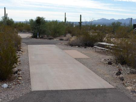 Pull-thru campsite with picnic table and grill, cactus and desert vegetation surround site.  Site 038