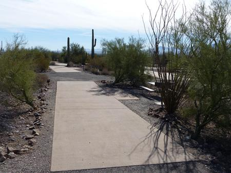 Pull-thru campsite with picnic table and grill, cactus and desert vegetation surround site.  Site 039