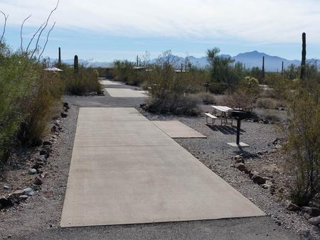 Pull-thru campsite with picnic table and grill, cactus and desert vegetation surround site.  Site 047