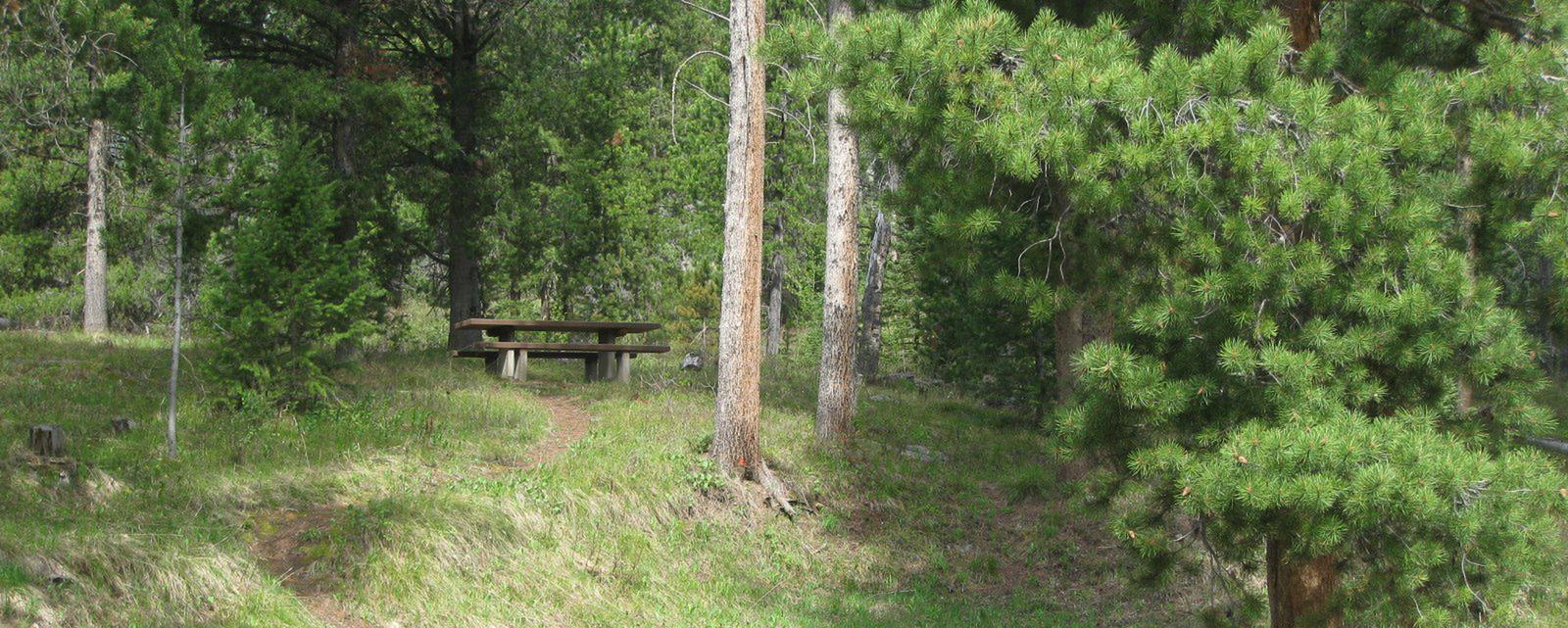 Site A1, surrounded by pine trees, picnic table & fire ringSite A1