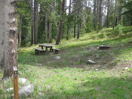 Site A11, campsite surrounded by pine trees, picnic table & fire ringSite A11