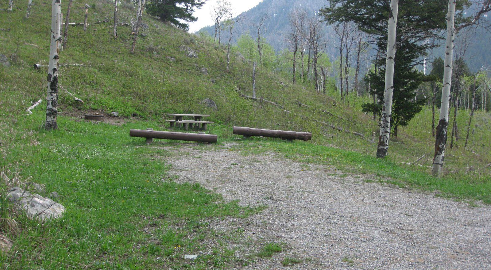 Site A10, campsite surrounded by pine trees, picnic table & fire ringSite A10