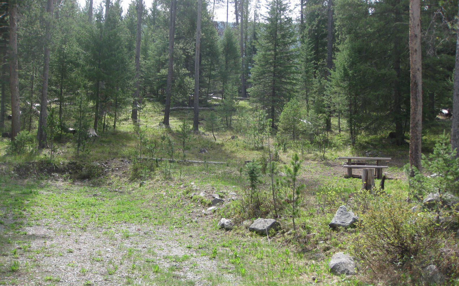 Site A16, campsite surrounded by pine trees, picnic table & fire ringSite A16