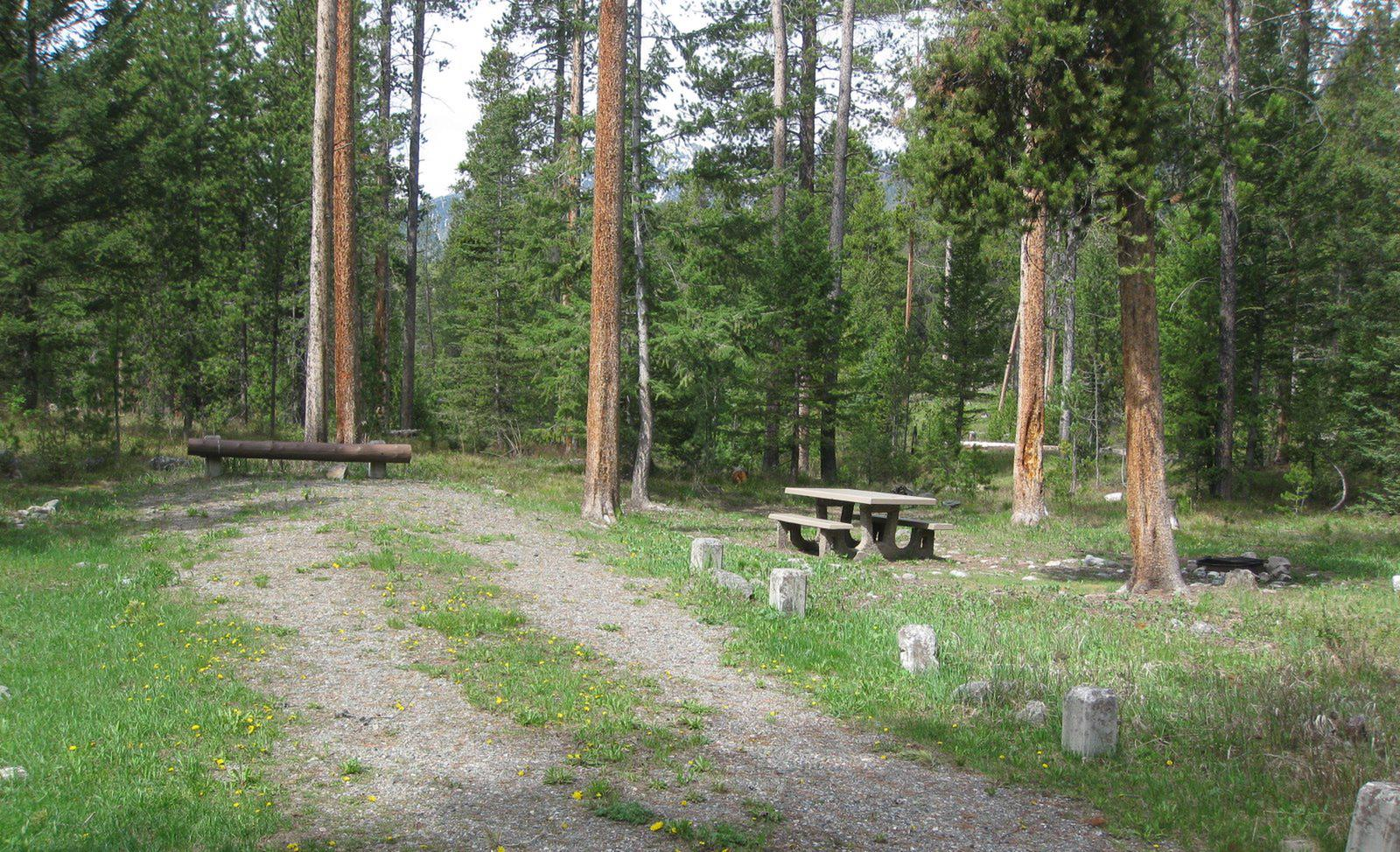 Site A17, campsite surrounded by pine trees, picnic table & fire ringSite A17