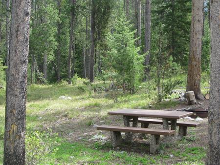 Site A19, campsite surrounded by pine trees, picnic table & fire ringSite A19