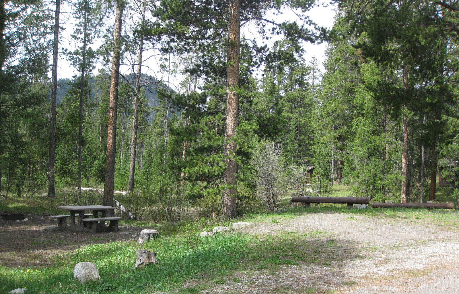 Site A20, campsite surrounded by pine trees, picnic table & fire ringSite A20
