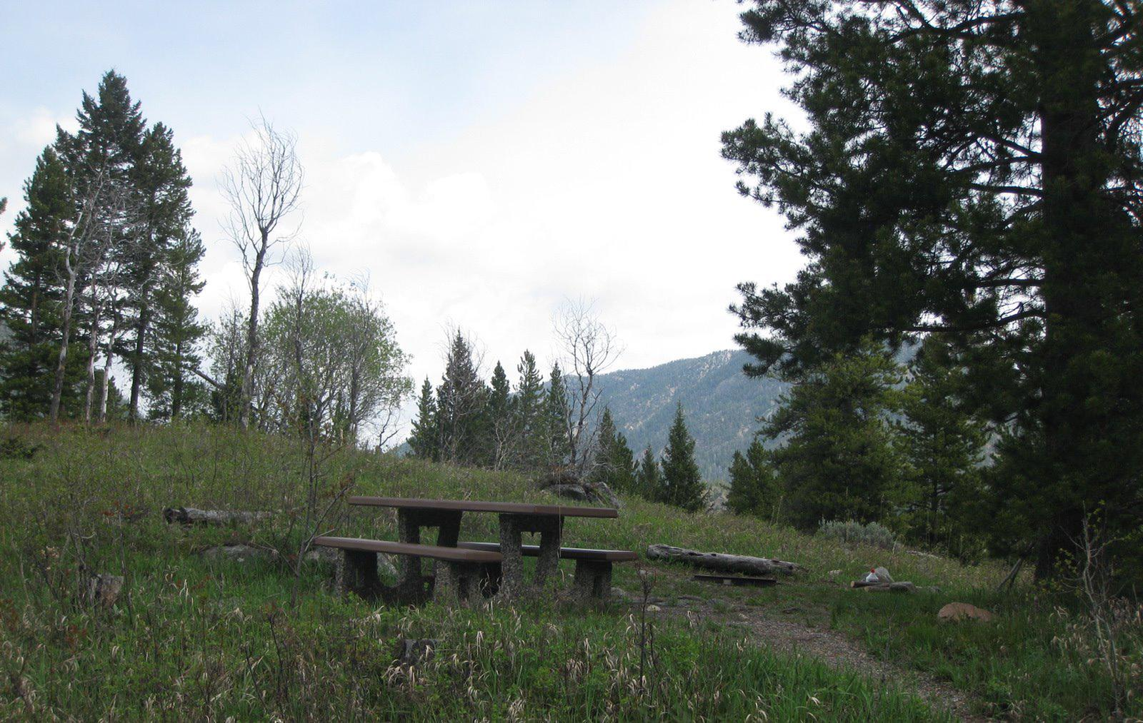 Site A23, campsite surrounded by pine trees, picnic table & fire ringSite A23