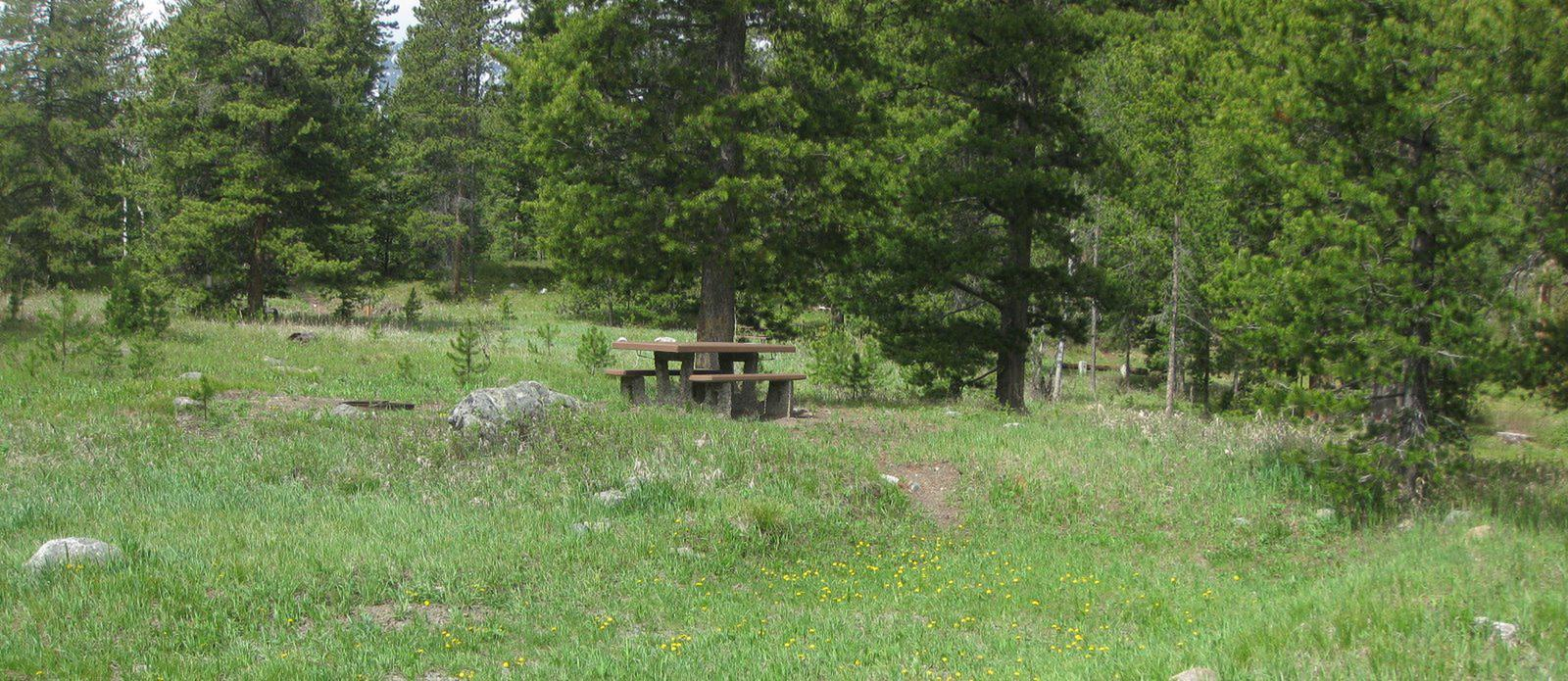 Site A24, campsite surrounded by pine trees, picnic table & fire ringSite A24
