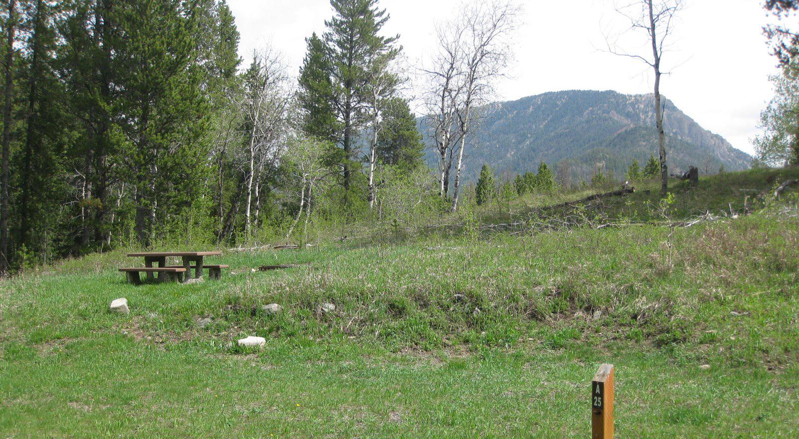 Site A25, campsite surrounded by pine trees, picnic table & fire ringSite A25