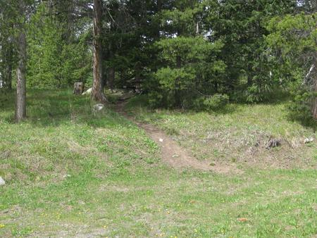 Site A3, campsite surrounded by pine treesSite A3
