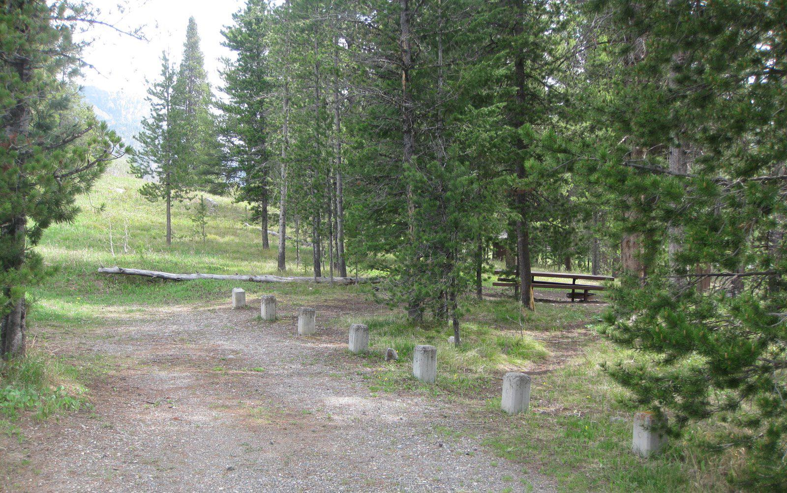Site A4, campsite surrounded by pine trees, picnic table & fire ringSite A4