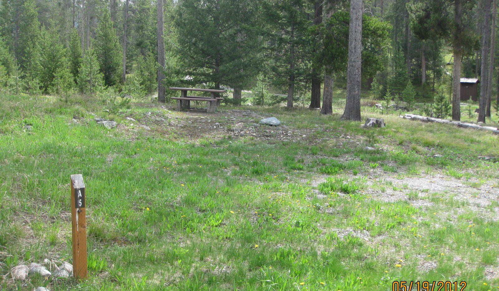Site A5, campsite surrounded by pine trees, picnic table & fire ringSite A5