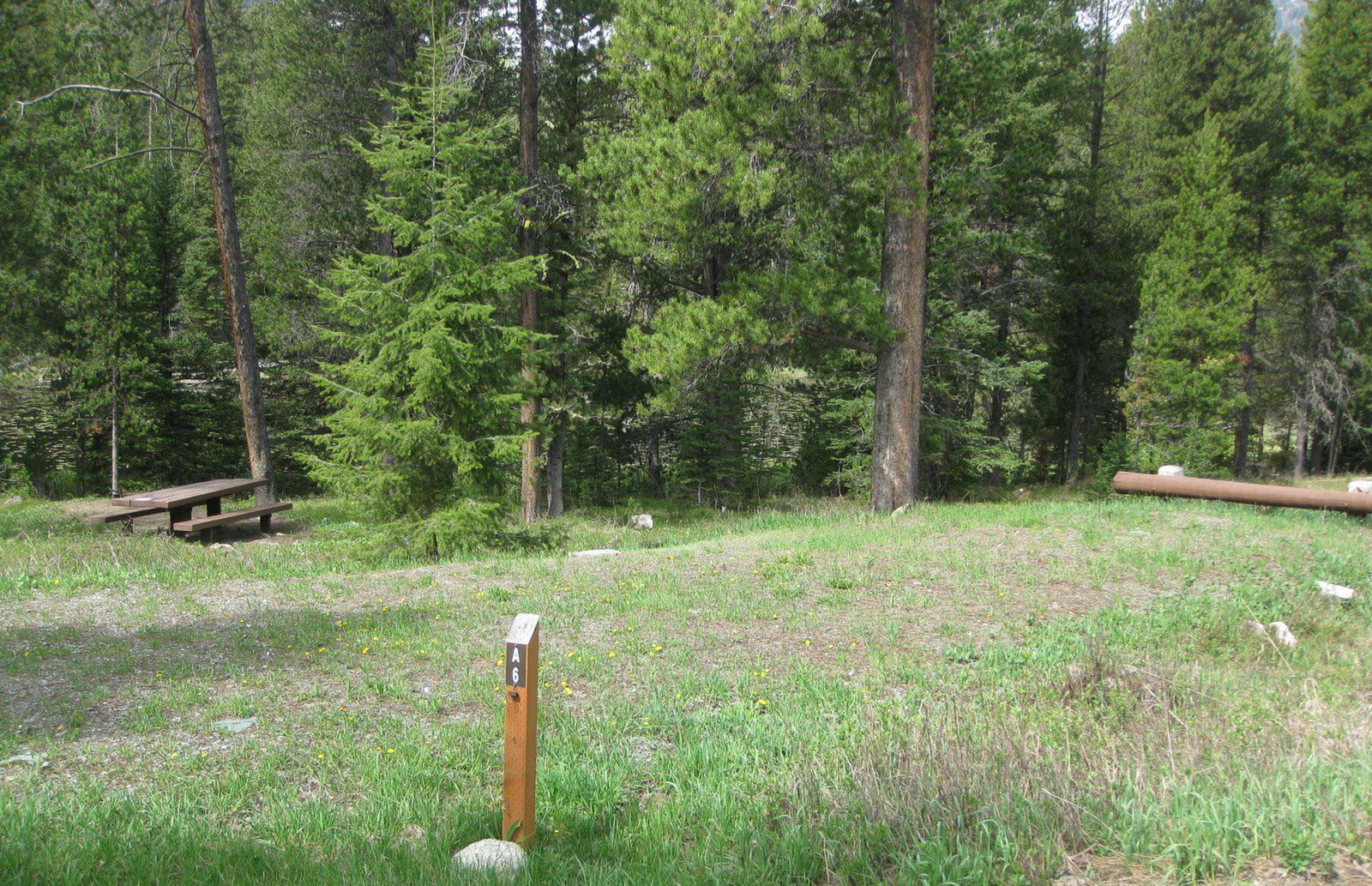 Site A6, campsite surrounded by pine trees, picnic table & fire ringSite A6
