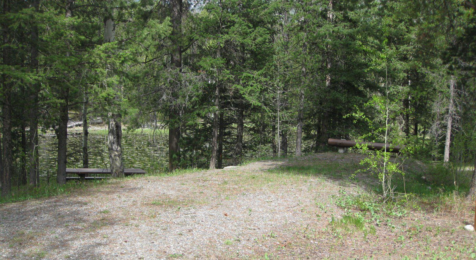 Site A7, campsite surrounded by pine trees, picnic table & fire ringSite A7