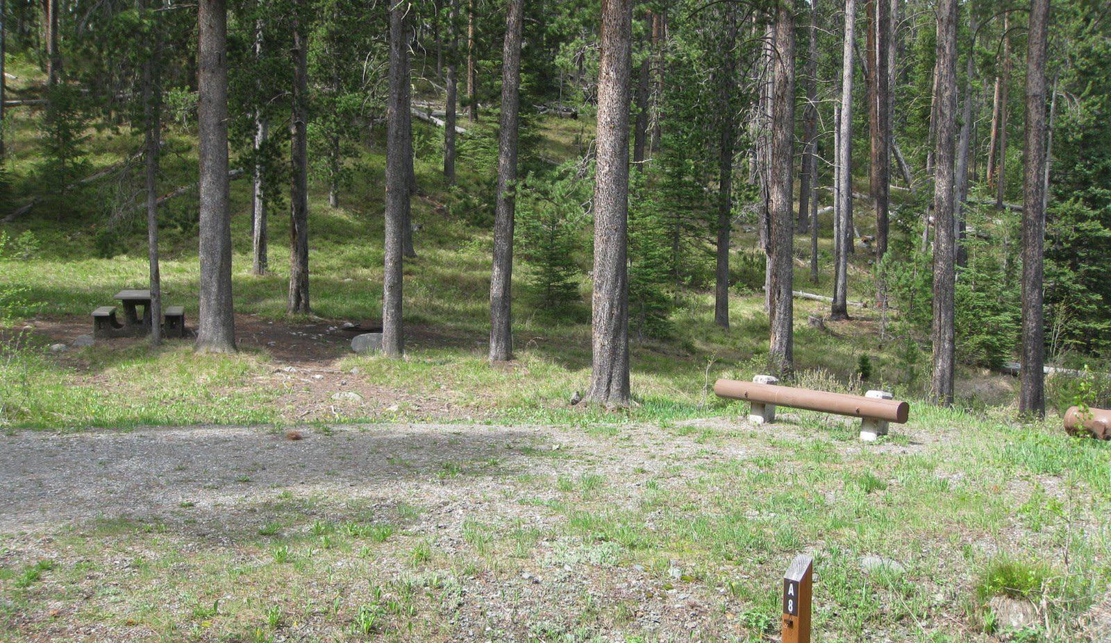 Site A8, campsite surrounded by pine trees, picnic table & fire ringSite A8