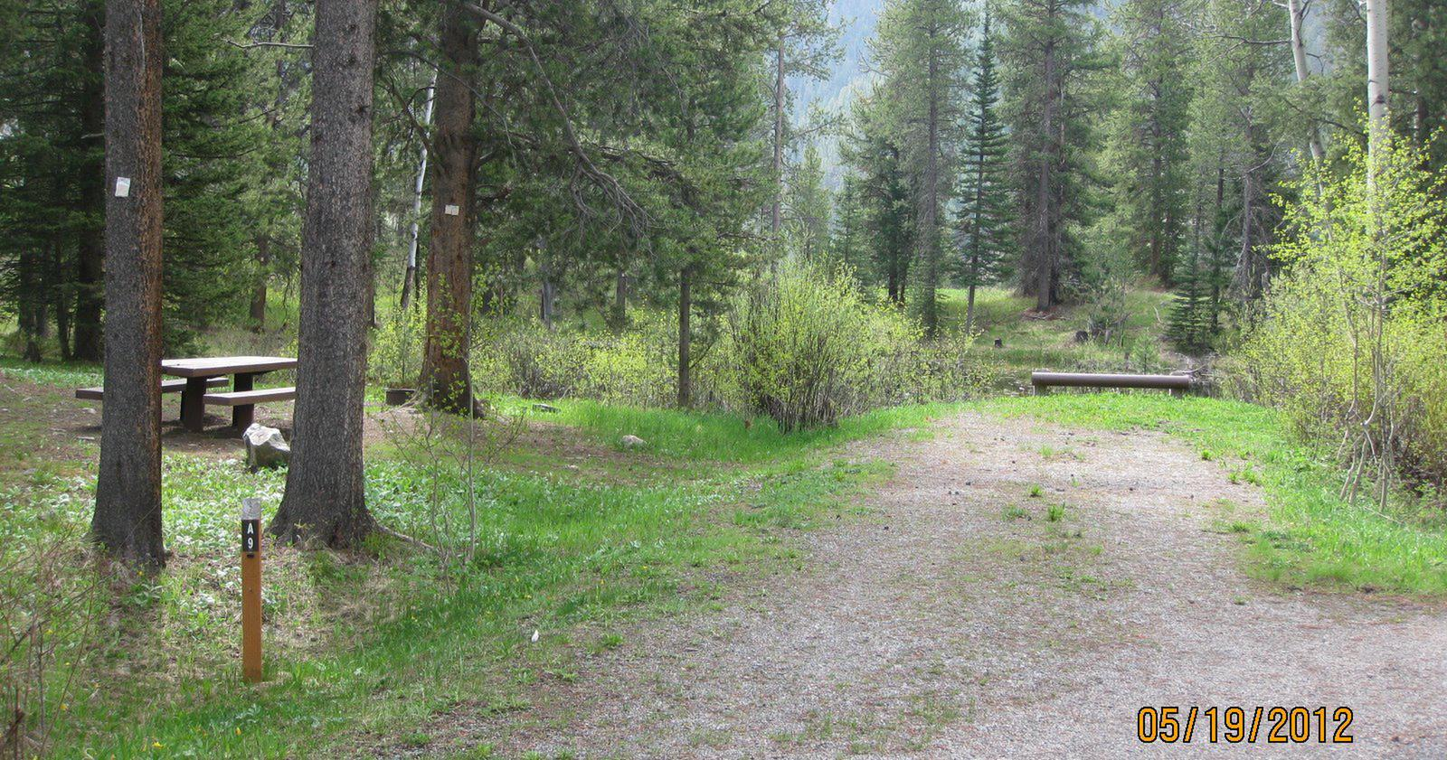 Site A9, campsite surrounded by pine trees, picnic table & fire ringSite A9