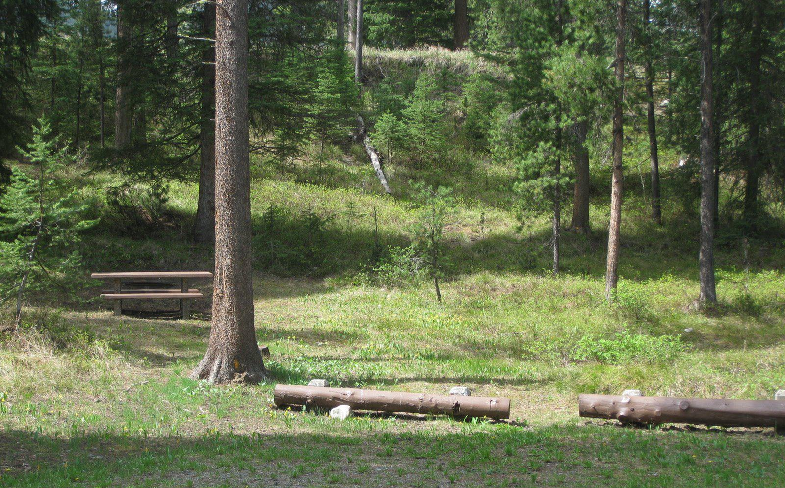 Site B1, campsite surrounded by pine trees, picnic table & fire ringSite B1